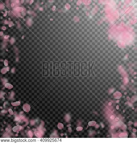 Sakura Petals Falling Down. Romantic Pink Flowers Vignette. Flying Petals On Transparent Square Back