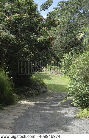Laneway Background For Wedding Composites, Trees And Pathway
