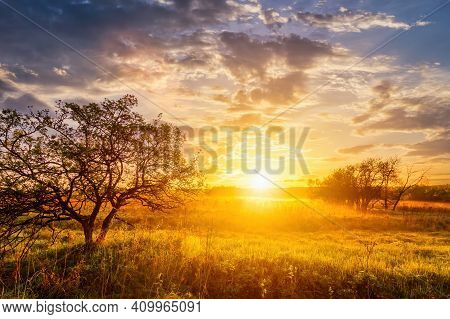 Sunrise In A Spring Field With Green Grass, Lupine Sprouts Trees On A Foreground And Cloudy Sky.