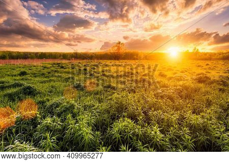 Sunrise In A Spring Field With Green Grass, Lupine Sprouts, Fog And Cloudy Sky.