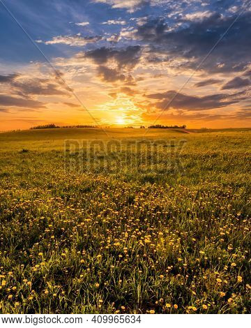 Sunrise Or Sunset On A Field Covered With Young Green Grass And Yellow Flowering Dandelions In Sprin