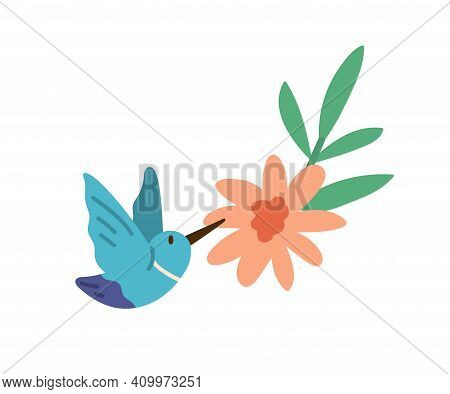 Beautiful Humming Bird Or Colibri With Spread Wings Flying Near Bright Blossomed Flower. Colored Fla
