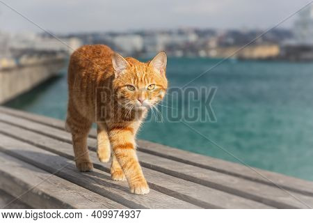 A Red Cat Walks On A Wooden Deck. Portrait Of A Kitten On A Blurry Background Of The City And The Se