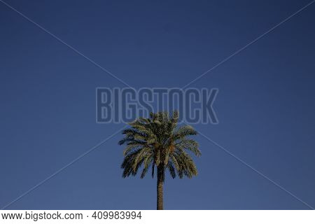 Palm Tree And Blue Sky.palms.trees.blue Sky.palm With A Clear Blue Sky.landscape And Nature.envirome