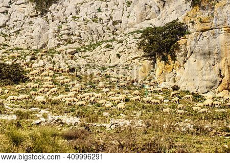 Sheeps In Mountains, Nature Reserve In The Sierra Del Torcal Mountain Range Near Antequera City, Pro