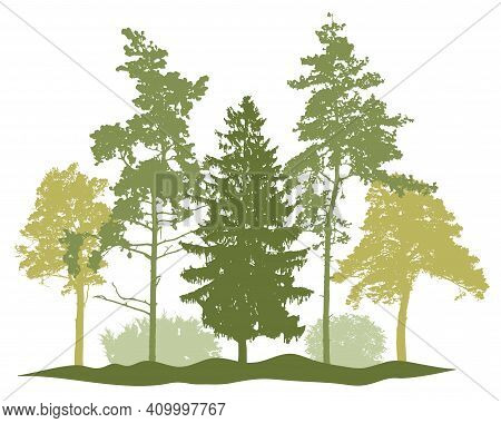 Spring Season, Silhouette Of Spruce Trees, Pine, Bush, Other Trees. Beautiful Nature, Woodland. Vect
