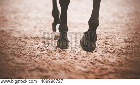A Black Horse Steps Its Hooves On The Sand In An Outdoor Arena In Training For Equestrian Sports Com