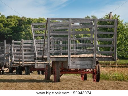 Cooper's Hawk (Accipiter cooperii) Sits On Empty Hay Wagon