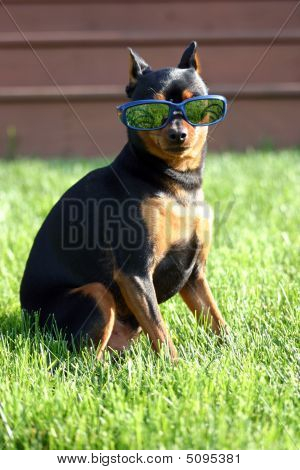 Dog Thinking He Is Kool