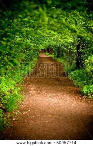 mystical alley through dark forest with lighting, fairy landscape