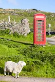 telephone booth with sheep, Clashnessie, Highlands, Scotland poster