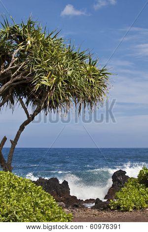 Keanae Peninsula on Maui is a popular stop on the Road to Hana.
