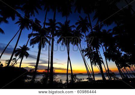 Twilight With Coconut Tree