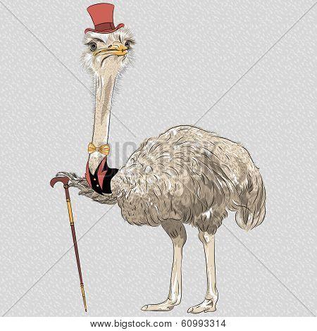 Vector Funny Ostrich Bird Hipster