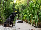 A black dog sits on the walkway as background poster
