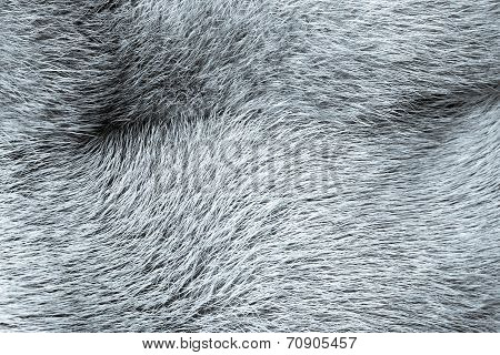Texture From Fur Of Selenium Color