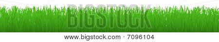 Horizontal Strip Of Grass - With Clipping Path