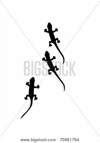 Lizard Small reptile isolated on white background poster