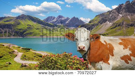 Luner See And Milk Cow, Austria