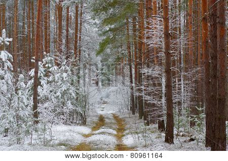 Winter in the forest.