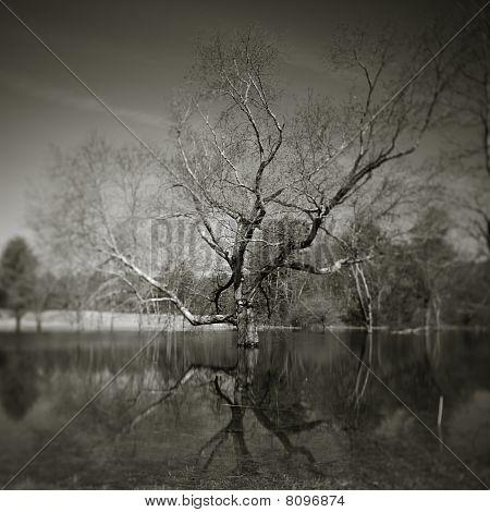 Tree Flood