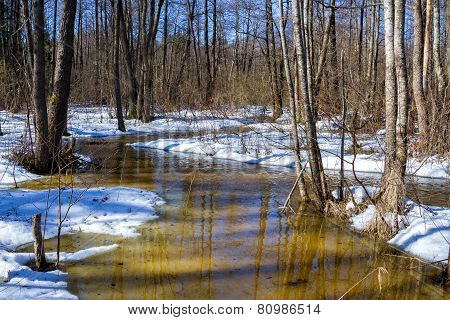 Early Spring In Forest, Sunny March Landscape