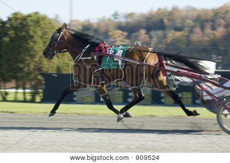 Flying Horse 2
