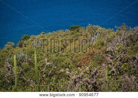 Beautiful landscape in Tortuguita beach, Machalilla National Park, Ecuador