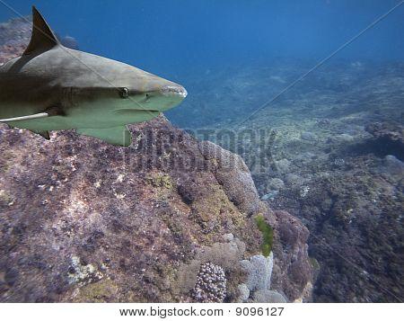 sharkkreef