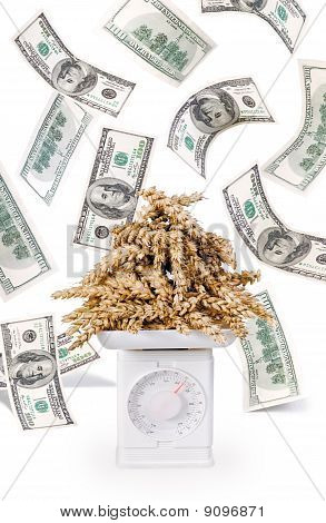 weighing of grain