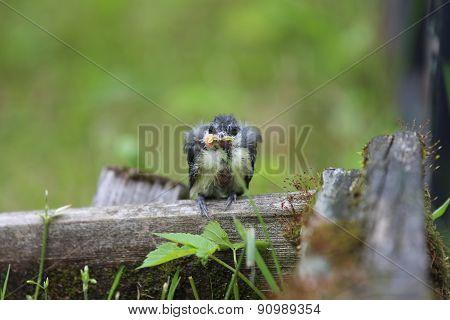 A nestling bird. The Leningrad Region, Russia.