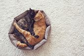 Couple cats sleep and hugging in their soft cozy bed on a floor carpet poster