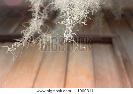 Old And Grunge Wooden Wall