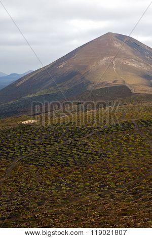Cultivation   Winery Lanzarote Spain L Geria Vine Wall Crops