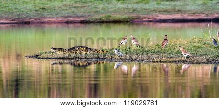 Nile Crocodile In Kruger National Park, South Africa