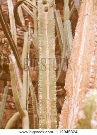 Retro Looking Cactus