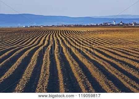 Furrows Rows In Potatoes Field