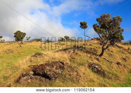 Landscape of trees and rocky field in Azores, Portugal