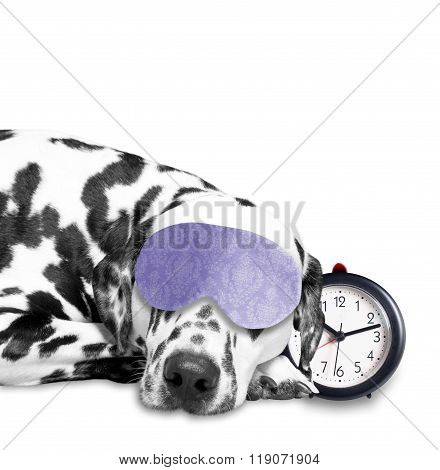 Dog Sleeping Next To An Alarm Clock