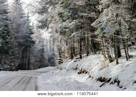 Greasy Winter Road In Beautiful Forest