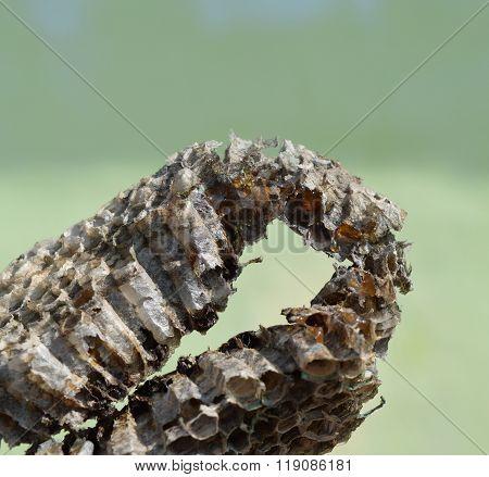 Wasp Honey Broke In A Hornet's Nest.
