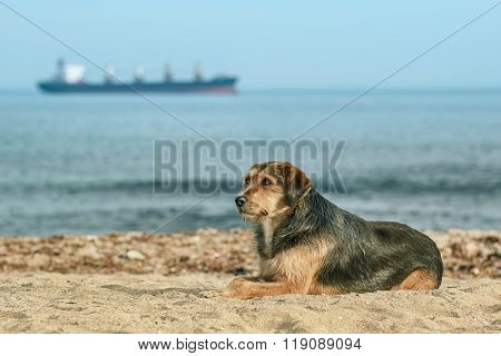 Stray Dog On The Shore