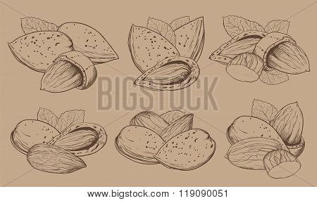 Vector coconut on white background. Isolated nuts.