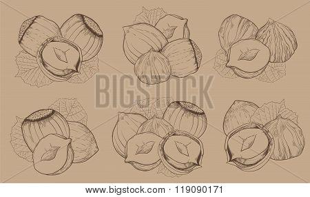Hazelnut on white background. Isolated nuts.