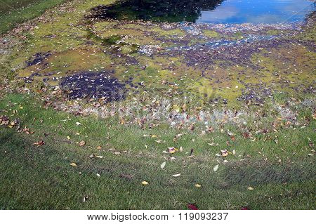 Edge of a Drainage Ditch