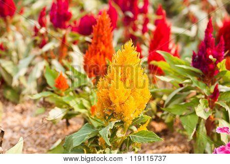 Beautiful Yellow Flower In Garden