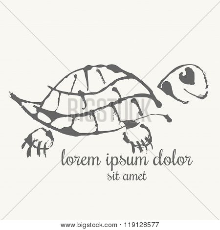 Turtle Hand Drawn Illustration. Logo Template