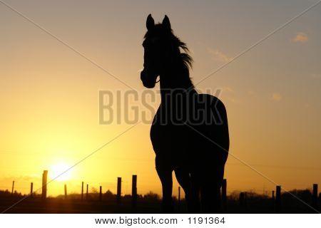 Horse Backlight