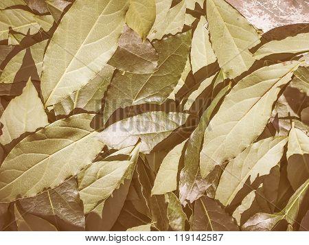 Retro Looking Bay Tree Leaf