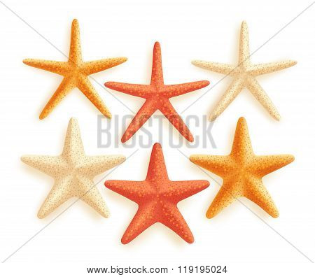 3D Realistic Set of Vector Starfish with Different Colors for Summer Design
